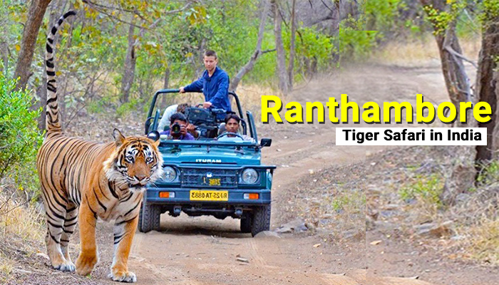Ranthambore Tiger Safari in India