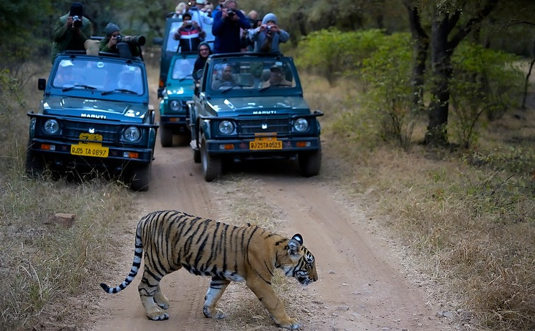 Safari Rides