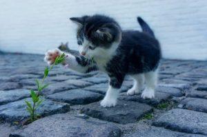 Potential Cat Owner
